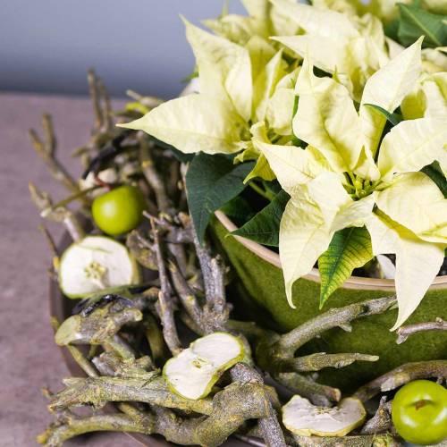 Dekoast curry bush groen gewassen 500g