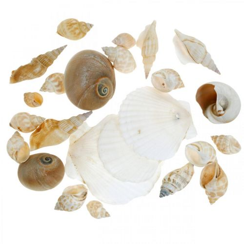 Decoratieve slakkenhuizen Zeeslakken natuur Maritieme decoratie 350g