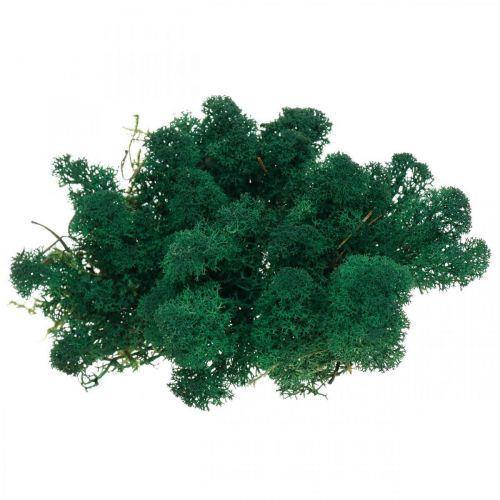 Deko-Mos groen rendiermos bewaart mos voor handwerk 400g