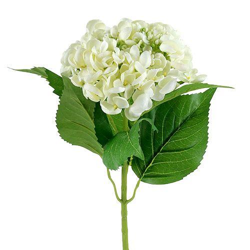Hortensia 60cm wit