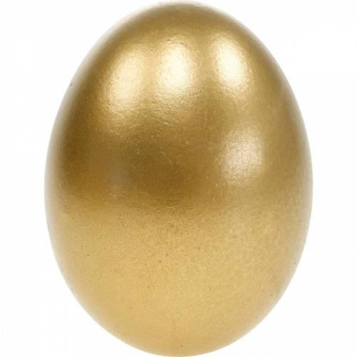 Kippeneieren Geblazen Eieren Paasdecoratie Verschillende Kleuren 10st