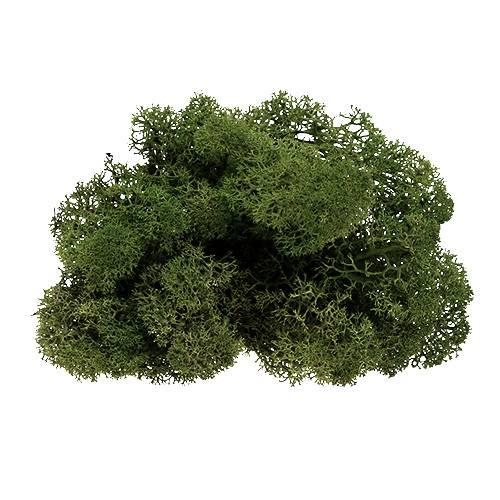 Moss rendiermos groen 500g