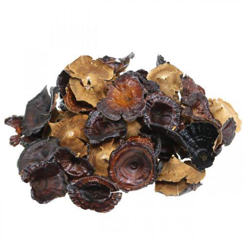Kalix paddenstoel naturel gelakte droge paddenstoelen decoratie groot 50st