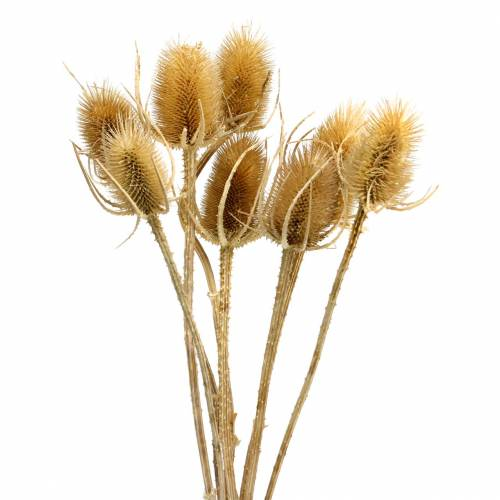 Gedroogde bloemen distel natuur 8st