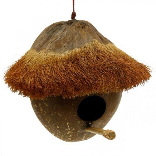 Kokosnoot als nestkast, vogelhuisje om op te hangen, decoratie kokos Ø16cm L46cm