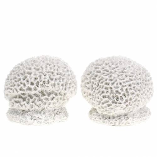 Maritieme decoratie koraal gips wit Ø10cm 2st