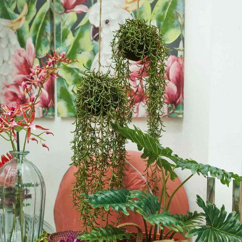 Koraal cactus Rhipsalis hanger 90cm