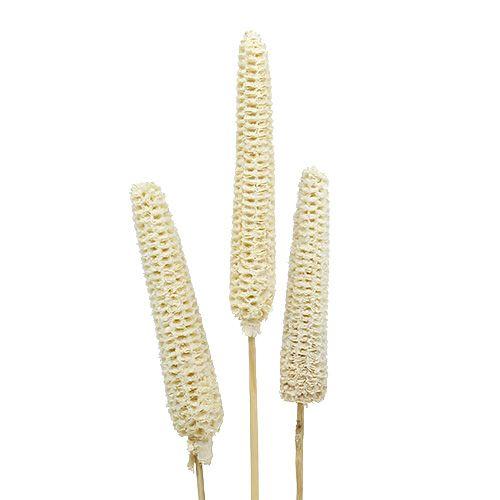Maïs op het stokje gebleekt 20st