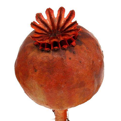 Papaverkoppen oranje geverfd 100st