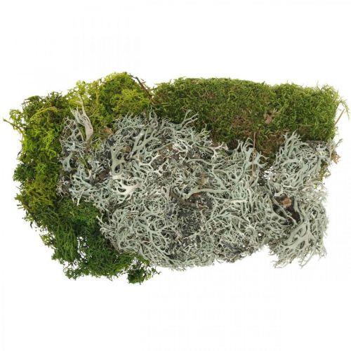 Decoratief mos voor knutselen Moss en korstmos mix groen, grijs 100g