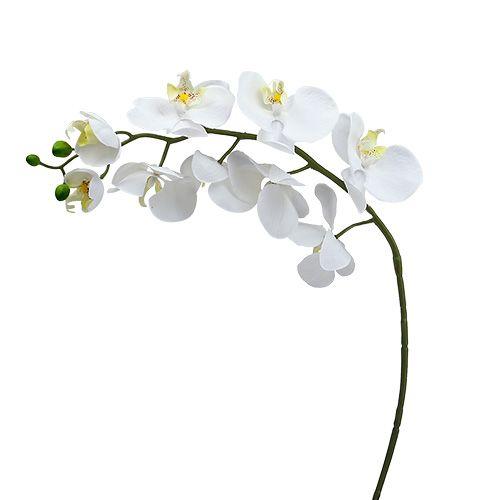 Mottenorchidee 75cm wit