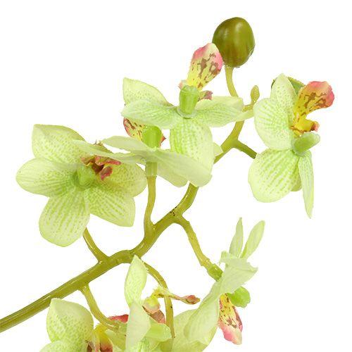 Orchidee 97cm lichtgroen