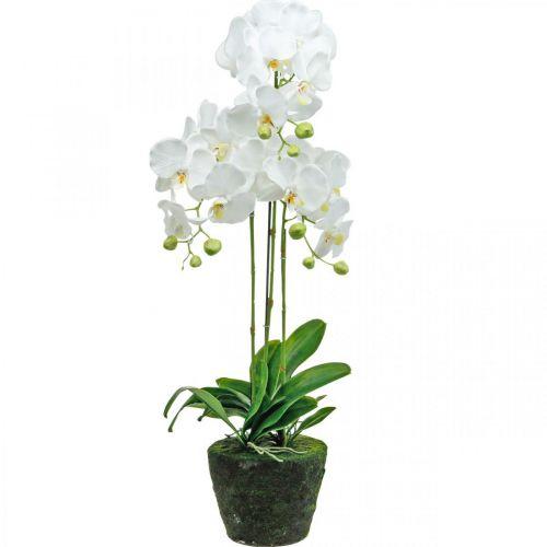Kunstorchideeën voor de witte pot 80cm