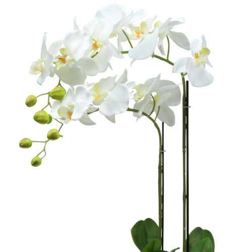 Orchidee wit op bol aarde 65cm