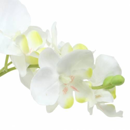 Orchideeën wit in een pot H35cm