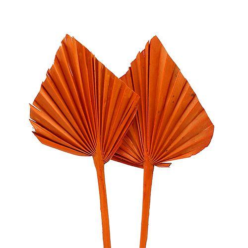 Palmspear mini oranje 100st