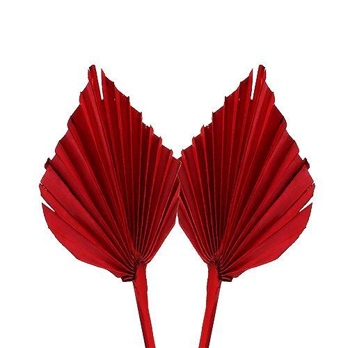 Palmspeer mini rood 100p