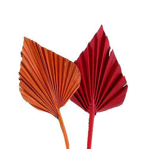 Palmspeer mini kont. Rood / oranje 100st