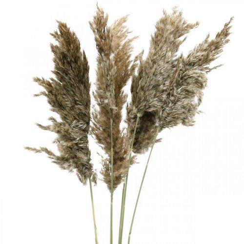 Gedroogd pampagras naturel Voor droogboeket 70-75cm 6st