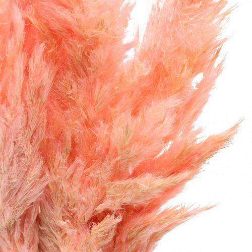 Pampagras gedroogde roze droogbloemen 65-75cm 6st in bos