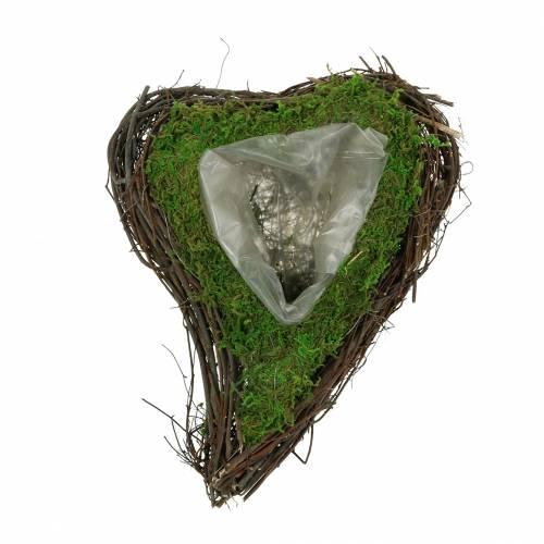 Plant hart wijnstok, mos 22cm x 28cm H8cm