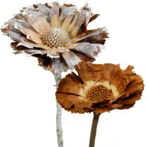 Exotic Mix Protea Rozet Naturel, Witgewassen Gedroogde Bloem 10st