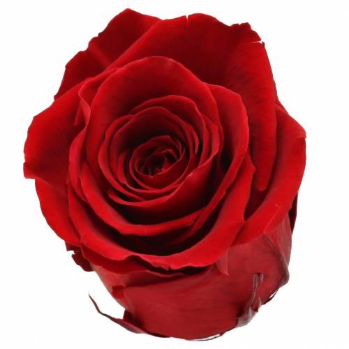 Infinity rozen groot Ø5,5-6cm rood 6st