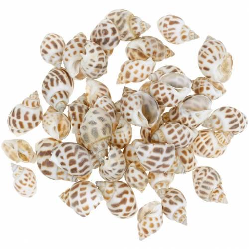 Deco maritieme slakken natuur 1-4cm 1kg