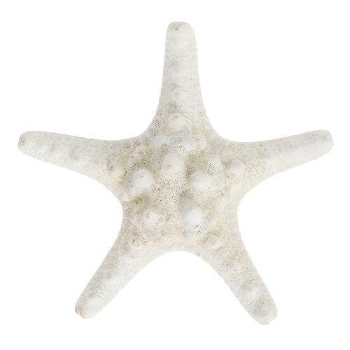 Zeester 9cm - 11cm wit 20st