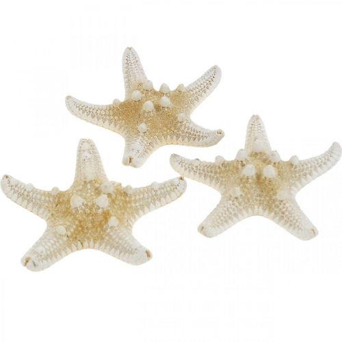 Starfish Nature Maritime Tafeldecoratie 5-8cm Real Starfish 20st