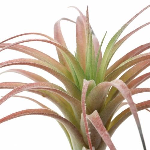 Tillandsia groen-rood geflockt 15cm 4st