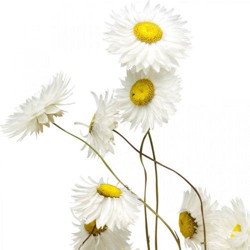 Gedroogde bloemen Acroclinium Witte bloemen Gedroogde bloemen 60g