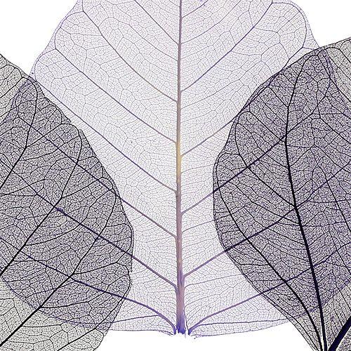Wilg verlaat skeletachtige paarse soort. 200St