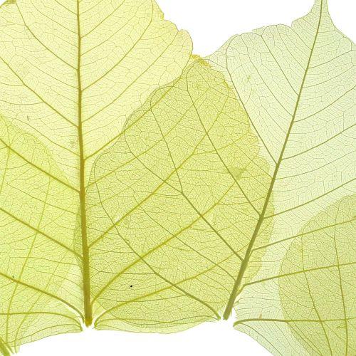 Wilgenbladeren geskeletteerd geel mengsel 200st