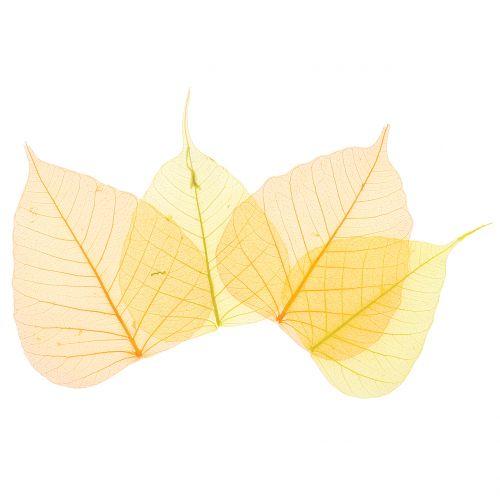 Wilgenbladeren skeletachtig geel, oranje 200st