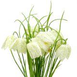 Dambordbloemen Fritillaria kunstwit, groen 40cm 12st
