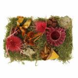 Droge bloemisterijmix met kegels en mosrood 150g herfstdecoratie